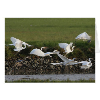 Great Egrets flying over a lake. Card