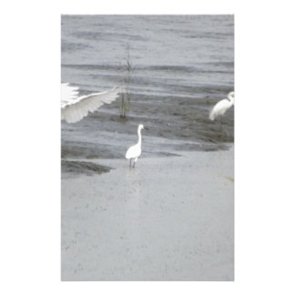 Great Egrets in a swamp Stationery