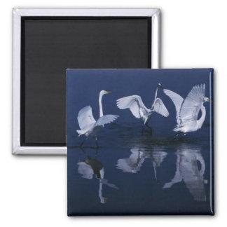 Great egrets magnets