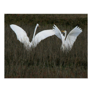 Great Egrets Print