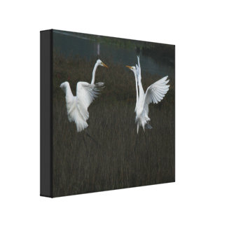 Great Egrets Stretched Print
