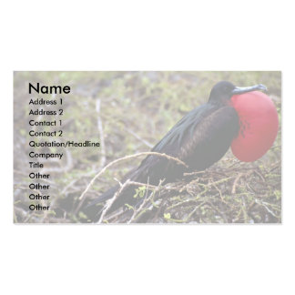 Great frigate bird, Genovesa Island, Galapagos Isl Double-Sided Standard Business Cards (Pack Of 100)