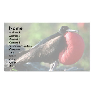 Great Frigatebird, Male Courtship With Large Gular Business Cards