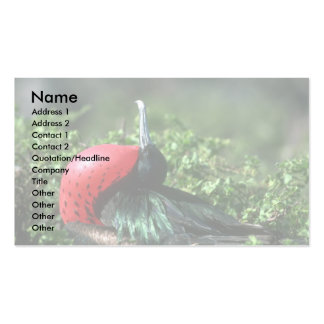 Great Frigatebird, Male Courtship With Large Gular Business Card Templates