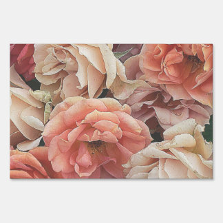 great garden roses, soft peach signs