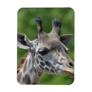 Great Giraffe Magnet