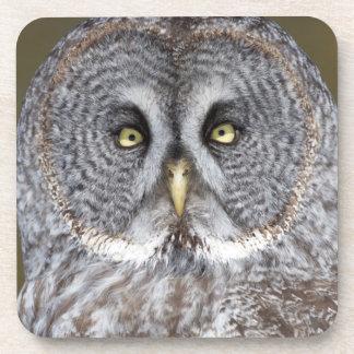 Great gray owl close-up, Canada Beverage Coaster