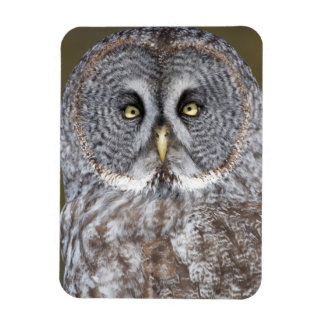 Great gray owl close-up, Canada Magnet