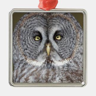 Great gray owl close-up, Canada Metal Ornament