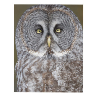 Great gray owl close-up, Canada Panel Wall Art