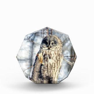 Great Gray Owl, Creamy Brown Watcher Awards