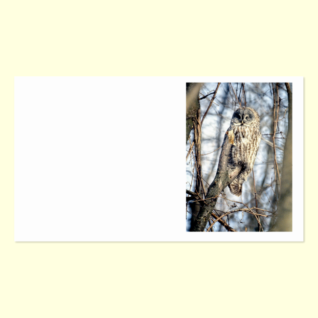 Great Gray Owl - Creamy Brown Watcher Double-Sided Standard Business Cards (Pack Of 100)