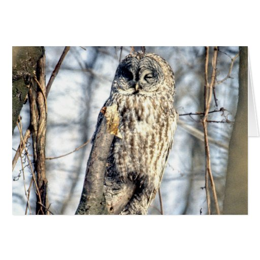 Great Gray Owl - Creamy Brown Watcher Greeting Card