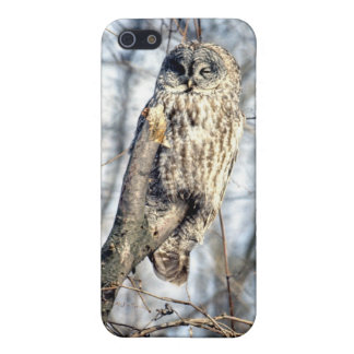 Great Gray Owl, Creamy Brown Watcher Cover For iPhone 5