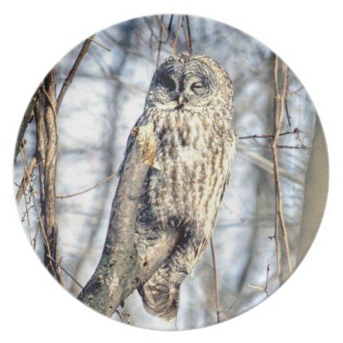 Great Gray Owl - Creamy Brown Watcher Dinner Plate