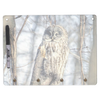 Great Gray Owl, Creamy Brown Watcher Dry-Erase Whiteboards