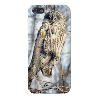 Great Gray Owl, Creamy Brown Watcher iPhone 5/5S Cover
