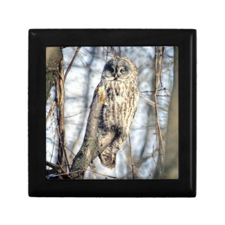 Great Gray Owl - Creamy Brown Watcher Keepsake Box