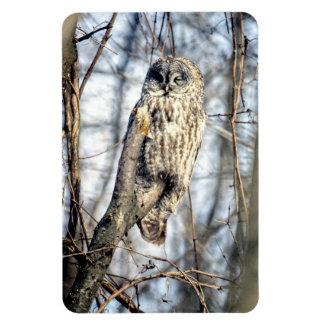 Great Gray Owl - Creamy Brown Watcher Magnet