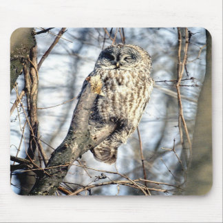 Great Gray Owl - Creamy Brown Watcher Mouse Pad