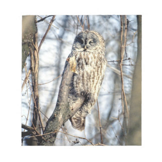 Great Gray Owl - Creamy Brown Watcher Note Pad
