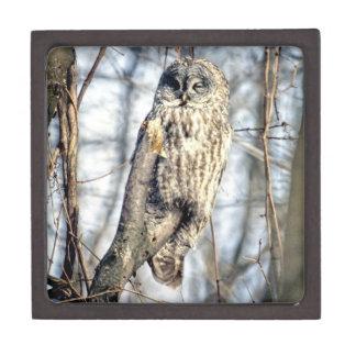 Great Gray Owl - Creamy Brown Watcher Premium Jewelry Boxes