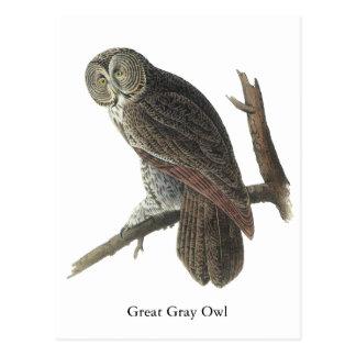 Great Gray Owl, John Audubon Postcards