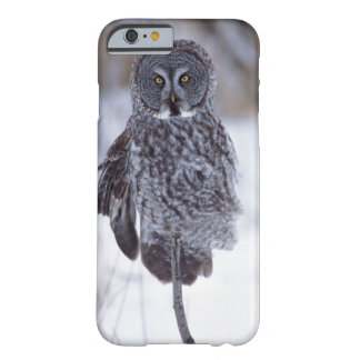 Great Gray Owl near Pine City MN, Barely There iPhone 6 Case