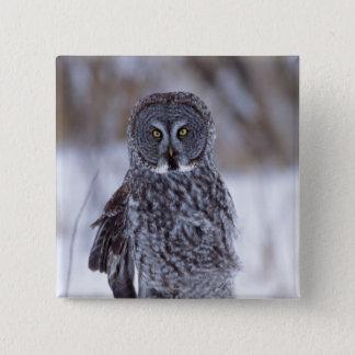 Great Gray Owl near Pine City MN, Button