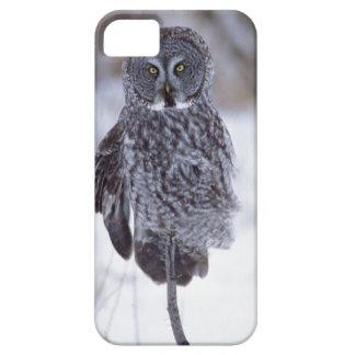 Great Gray Owl near Pine City MN, iPhone SE/5/5s Case