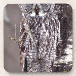 Great Gray Owl on an Aspen tree Beverage Coaster