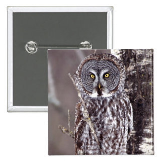 Great Gray Owl on an Aspen tree 2 Inch Square Button