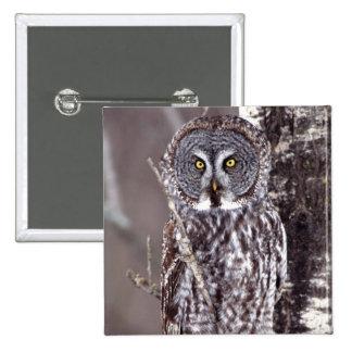 Great Gray Owl on an Aspen tree Button
