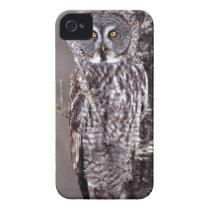 Great Gray Owl on an Aspen tree iPhone 4 Case