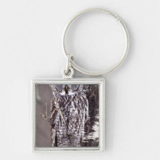 Great Gray Owl on an Aspen tree Keychain