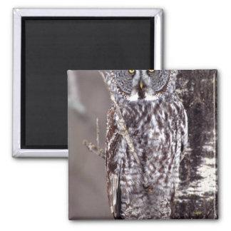 Great Gray Owl on an Aspen tree Magnet