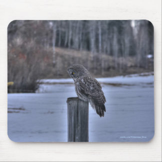Great Gray Owl on Fence Post Winter Wildlife Photo Mouse Pad