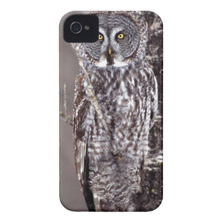 Great Gray Owl, Pine City MN perched on Aspen iPhone 4 Case-Mate Cases