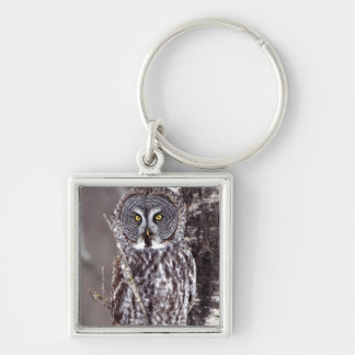 Great Gray Owl, Pine City MN perched on Aspen Keychain
