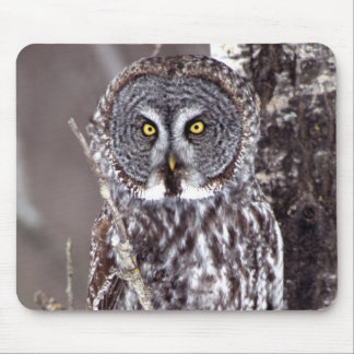 Great Gray Owl, Pine City MN perched on Aspen Mouse Pad