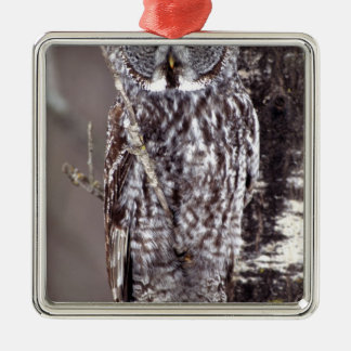 Great Gray Owl, Pine City MN perched on Aspen Christmas Ornament
