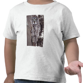 Great Gray Owl, Pine City MN perched on Aspen Tee Shirt