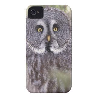 Great Gray Owl (Strix nebulosa) iPhone 4 Case-Mate Case