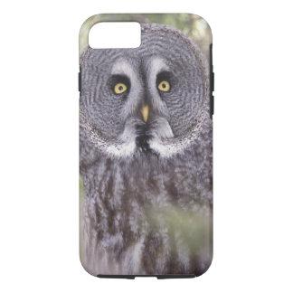 Great Gray Owl (Strix nebulosa) iPhone 8/7 Case