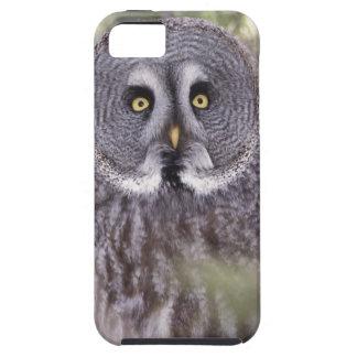 Great Gray Owl (Strix nebulosa) iPhone SE/5/5s Case