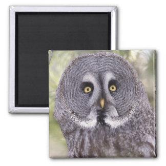 Great Gray Owl (Strix nebulosa) Magnet