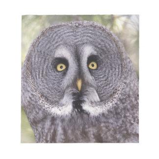 Great Gray Owl (Strix nebulosa) Notepad