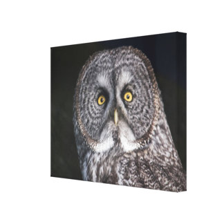 Great Gray Owl Wrap Around Canvas Print