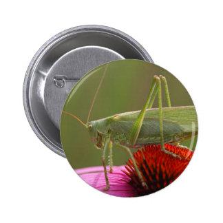 Great Green Bush-Cricket  (Tettigonia viridissima) Button