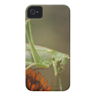Great Green Bush-Cricket  (Tettigonia viridissima) iPhone 4 Cover